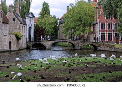 Bruges, Belgium - August 13, 2018: Tourists on bridge - gate to the women's residence of the Beguines (Prinselijke Begijnhof van Wijngaerde) look at a colony of swans, protected animal and attraction.