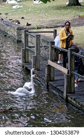 Bruges, Belgium - August 13, 2018: Tourist look at a couple of swans - protected animal and tourists attraction in Bruges, Belgium.