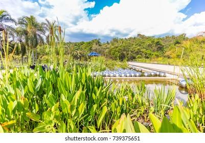 BRUMADINHO, BRAZIL - OCTOBER, 15, 2017: Narcissus Garden by Yayoi Kusama at Inhotim Institute, Minas Gerais