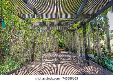 Brumadinho, Minas Gerais, Brazil. View of a orchidarium at Inhotim