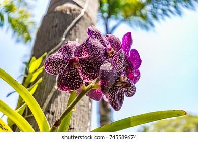 Brumadinho, Minas Gerais, Brazil. View of a orchid at Inhotim