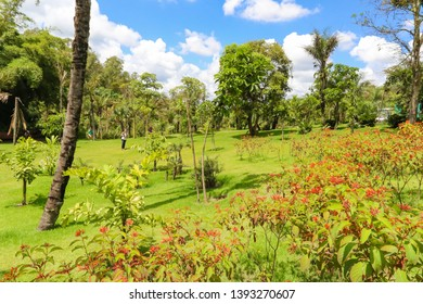 Brumadinho/Minas Gerais/Brazil - JUL 18 2018: Partial view of the Beautiful Garden of Inhotim