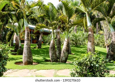 Brumadinho/Minas Gerais/Brazil - JUL 18 2018: Partial view of the Beautiful Tree Garden Palm trees in Inhotim
