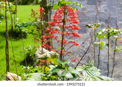 Brumadinho/Minas Gerais/Brazil - JUL 18 2018: Third Partial view Beautiful Plant in the Garden of Inhotim