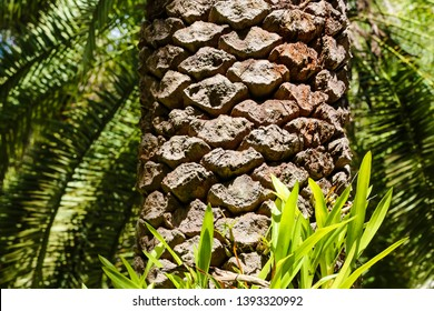 Brumadinho/Minas Gerais/Brazil - MAR 23 2013: Palm tree trunk inside the Institute of Inhotim
