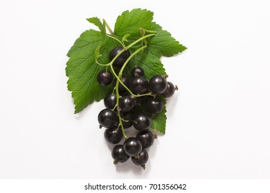 brunch of fresh blackcurrant with green leaves