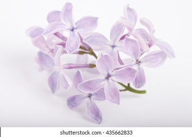 brunch of lilac flowers on white background macro photo