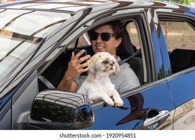 Brunette man in a black car with a seat belt wearing sunglasses and a gray polo shirt with a collar. With a white, yellow and black shih-tzu dog. Driving in holiday mood and good vibes.