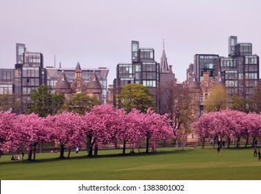 Bruntsfield Links in Edinburgh city, public park and popular upmarket residential area. Rows of pink cherry blossom trees in foreground. Edinburgh city, scotland. Uk. aPRIL 2019
