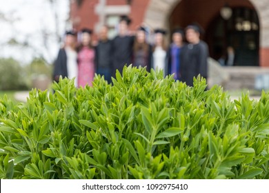 a brurred group of college seniors are standing behind a bush