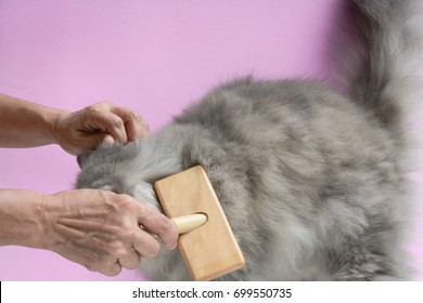 Brush the cat fur comb on a wooden table and gray persian cat. Enjoy and happy the pink wall background.selective focus