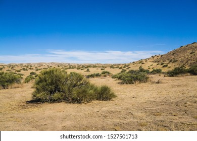 Brush grows in the flat plains of the Mojave Desert in the American west.