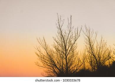 brushes at sunset