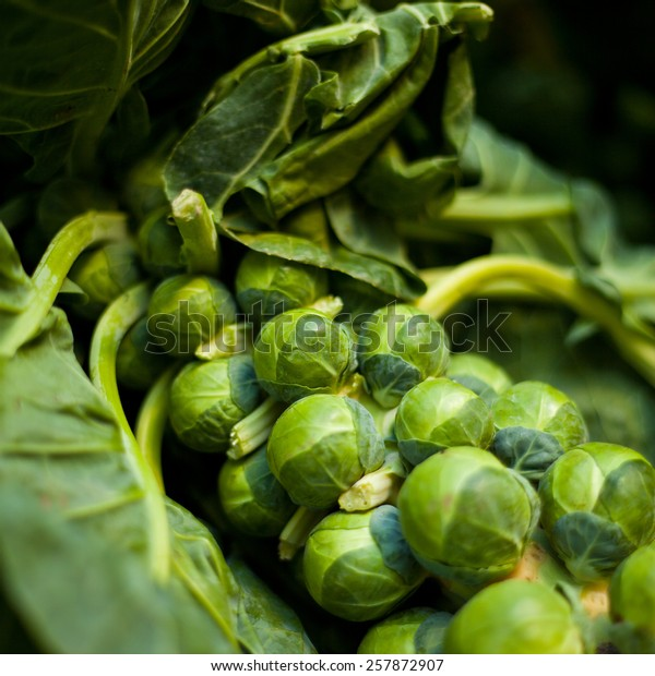 Brussels sprouts on a bush in a garden. Vegetables, fresh healthy food. Macro perspective, nobody. Garden, gardening, rising vegetables.