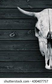 brutal skull. The skull of a bull