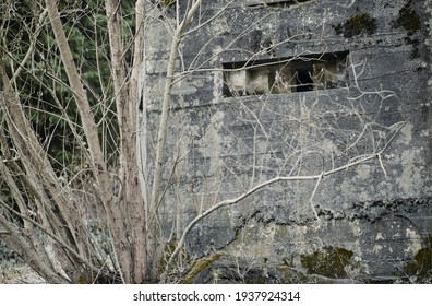 A brutalist cold gritty concrete world war two, ww2, pillbox war bunker defence fortress in a dirty forgotten woodland in europe. wartime relic and forgotten outpost using solid architecture to defend