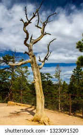 Bryce Canyon Dead Tree on Eroded Rock with Blue Sky and Cluds in Background