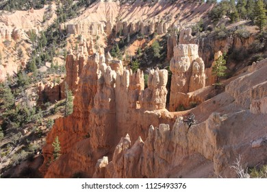 Bryce Canyon National Park, UT - June 19, 2018: A pretty view looking down into the heart of Bryce Canyon at ponderosa, juniper and some of the hoodoos (small buttes) that define Bryce's landscape.