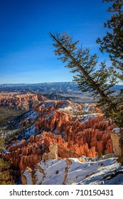 Bryce Canyon tree photobomb