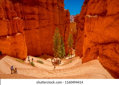 BRYCE CANYON, UTAH, JUNE, 07, 2018: Unidentified people walking inside of Bryce Canyon surrounding of Pine Trees in a sandy path in National Park, Utah