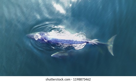 Bryde's whale and calf are swimming at Gulf of Thailand. Taking with Drone in High angle view.