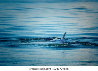 Bryde's whale in the sea of thailand.