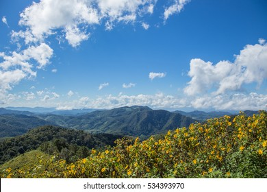 Bua Tong flowers with and Mexican sunflowers white clouds and blue sky in Mae Hong Son county Thailand.