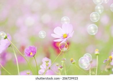 Bubbles And Cosmos