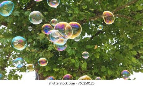 Bubbles in Flight under a tree