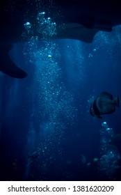 Bubbles underwater in the ocean