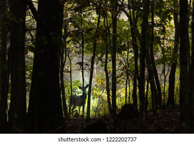 a buck in the early dawn at the edge of the forest staring with mist in the back ground