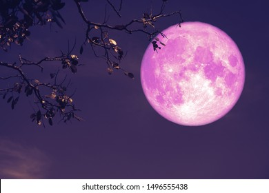 buck pink moon on night red sky back silhouette tree, Elements of this image furnished by NASA
