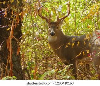 Buck In Sabraton