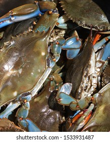 bucket of blue crabs south carolina