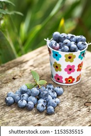 A bucket of blueberries in the garden on a wooden table