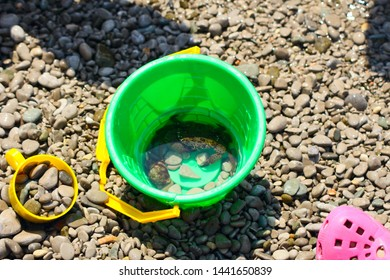 bucket with crab on the beach of stones