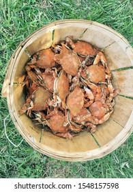 Bucket of fresh Maryland Crabs