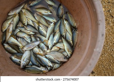 A bucket full of caught fish by local people