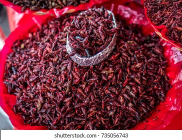 A bucket full of crickets in Oaxaca, Mexico Chapulines