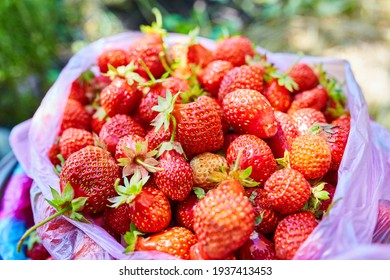 a bucket of strawberries, just picked from the garden