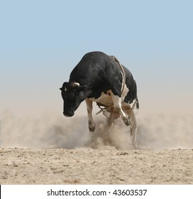 Bucking Bull Images Stock Photos Amp Vectors Shutterstock