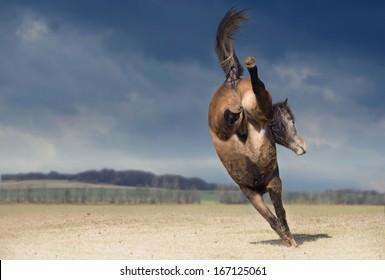 bucking horse on nature background