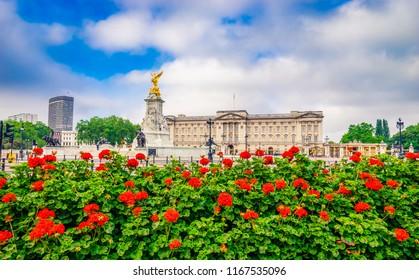 Buckingham Palace with flower foreground. London. England