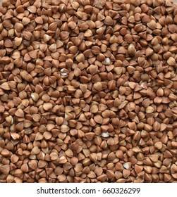 buckwheat is a close-up