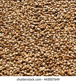 buckwheat groats background