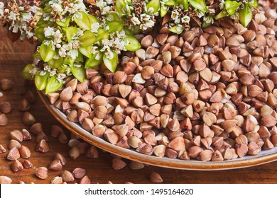 Buckwheat groats and a stalk with green fruits of buckwheat on a plate close-up. Food background.