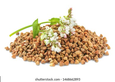 Buckwheat plant with white flowers and seeds. Buckwheat plant white blossom. Buckwheat seeds and fresh flowers isolated on white background. Buckwheat flower isolated on white.
