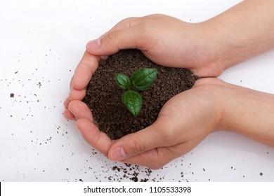 Bud in the earth - Shutterstock ID 1105533398