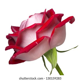 bud of a red rose is isolated on white background
