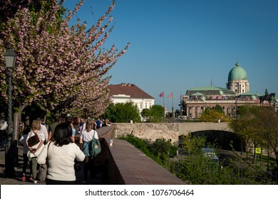 Budapest, Hungary - April 21, 2018: Famous walkway in Buda Castle with japanese cherry tree
